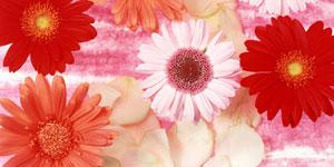 Farben der Blumen