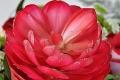 Firsche Blumen