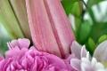 Lilien im frischen und unaufgeblühten Zustand