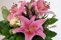 Wunderschöne geöffnete Lilien