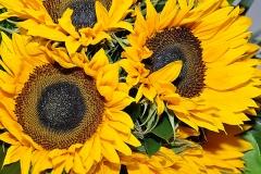 jollyflowers6