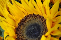 jollyflowers7