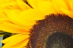 jollyflowers8