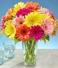 Blumen richtig pflegen