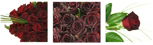 Schwarze Rosen versenden