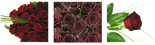 schwarze rosen versenden schwarze rosen online. Black Bedroom Furniture Sets. Home Design Ideas